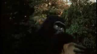 Mighty Gorga vs. Dinosaur