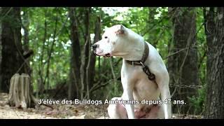 History of American Bulldogs
