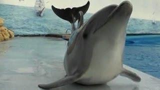 Dolphins Crawl on Land
