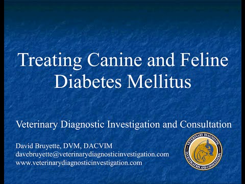 Treating Canine and Feline Diabetes Mellitus