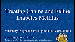 hqdefault - What Are The Symptoms Of Diabetes In A Cat