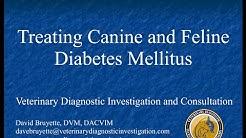 hqdefault - Diabetes Mellitus Dog Prevention