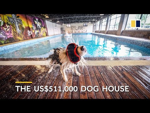 Colfax - Watch: Man Builds A $500,000 Dog Mansion