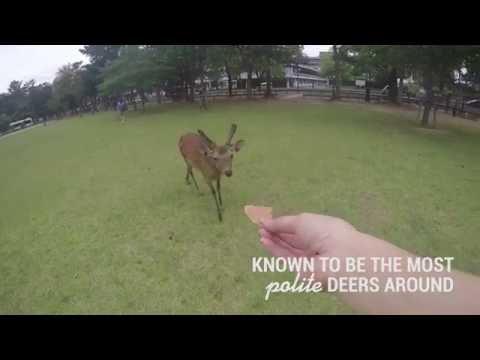 Nara Deers | The Travel Intern