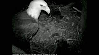 02-16-18 6:00 a.m. feeding at Big Bear Lake.