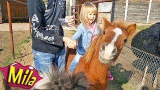 Наглый Рыжий Пони 🐎 Животные Едят с Рук 🐴 Катаемся на Разных Пони без Седла 🏇