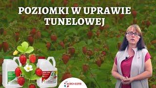 PolskieAminokwasy.pl - AgroSorb Radicilum Folium - Poziomki w uprawie tunelowej