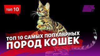 видео Популярные породы кошек
