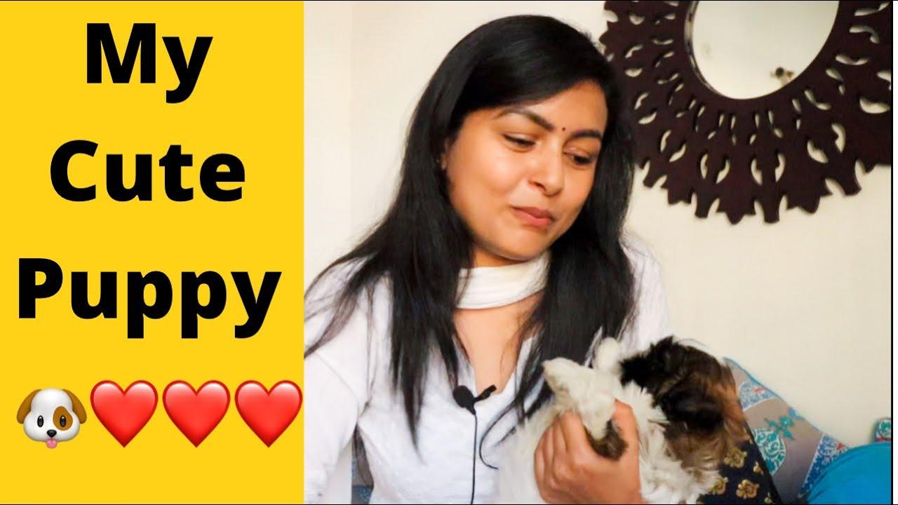 Meet My New Cute Puppy 🐶❤️ Shih Tzu