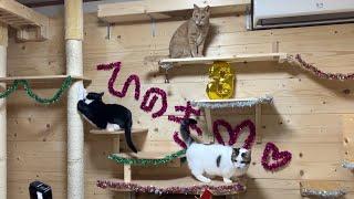 ひのきのお誕生日会の後片付けをする猫