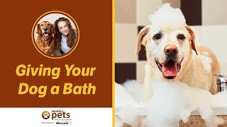 Dr. Becker on Giving Your Dog a Bath