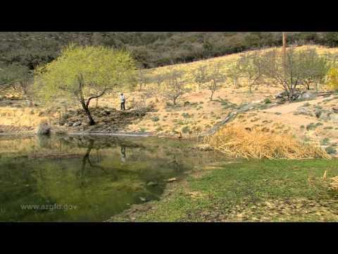 2012 Show 1 AZ Wildlife Views