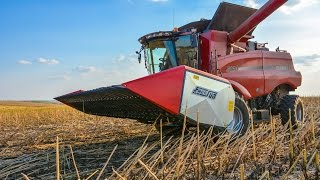 sunflower harvest with case ih combine