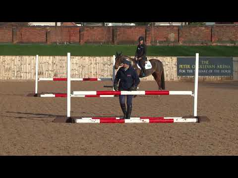British Showjumping Training - Retraining of Racehorses - Part 3