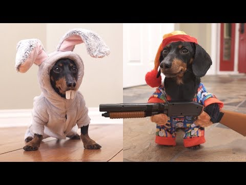 Ep 6. Easter Bunny Wakes Up Grumpy Wiener Dog!