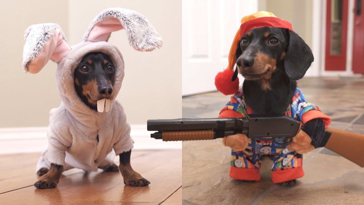 Download Ep 6. Easter Bunny Wakes Up Grumpy Wiener Dog!