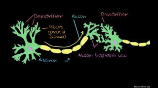 Depresyonun Antidepresanlarla Tedavisi (Sağlık: Akıl Sağlığı) (Psikoloji / Akıl Sağlığı)