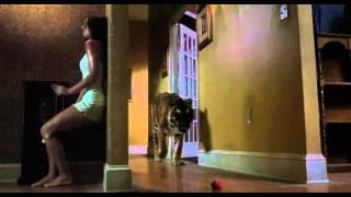 Dans l'œil du tigre (2010) Film HD Streaming VF