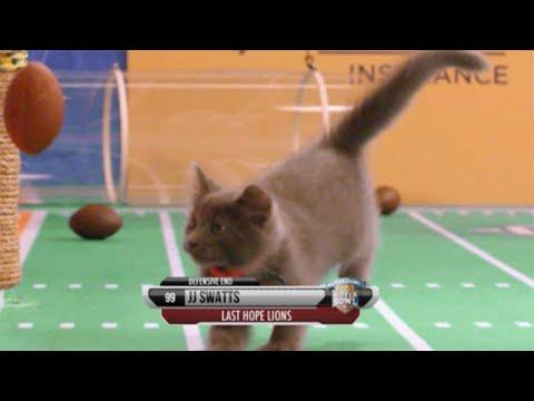 jackson galaxy cat leash