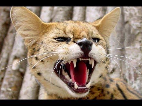 my-cat-wants-to-kill-me!!