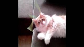 Повадки моего кота