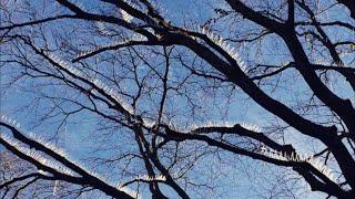 В Бристоле на ветках деревьев установили шипы, их предназначение действительно пугает