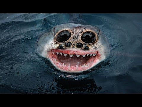 Top 10 Most Terrifying Animals