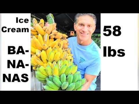 BANANA CARE | Harvesting  |  Pruning | Propagating  |  Mulching