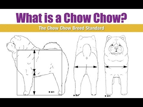 Best Dog Breed Ever! Chow Chow Breed Standard