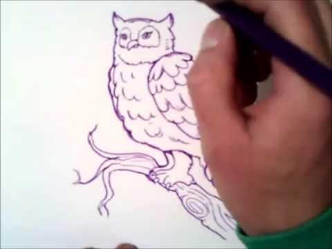 comment dessiner un hibou
