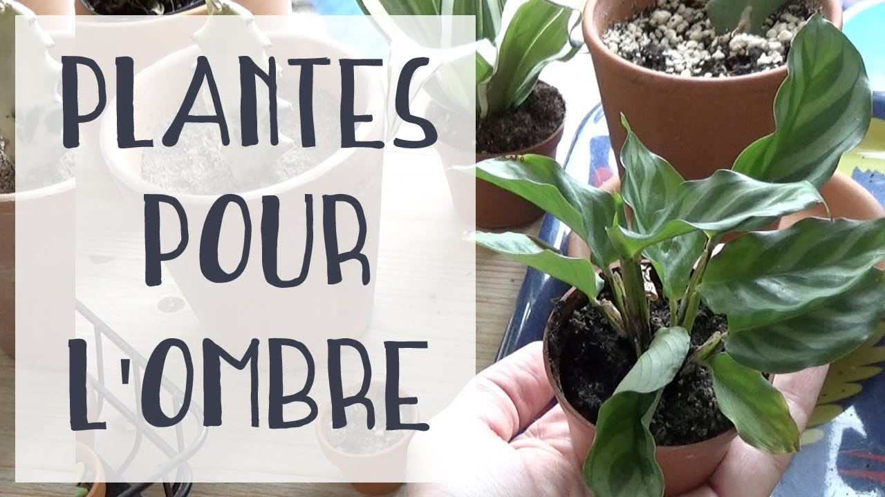 Plante Pour Salle De Bain Sombre ? 5 plantes pour une pièce sombre ? #1
