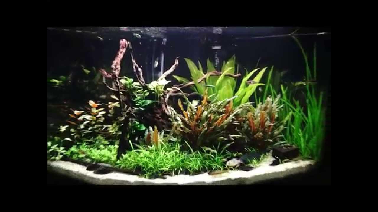 juwel trigon 190 planted community tank youtube. Black Bedroom Furniture Sets. Home Design Ideas