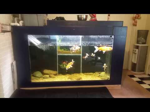 DIY Plywood Koi Aquarium 500 Gallons- Indoor Pond Update 2
