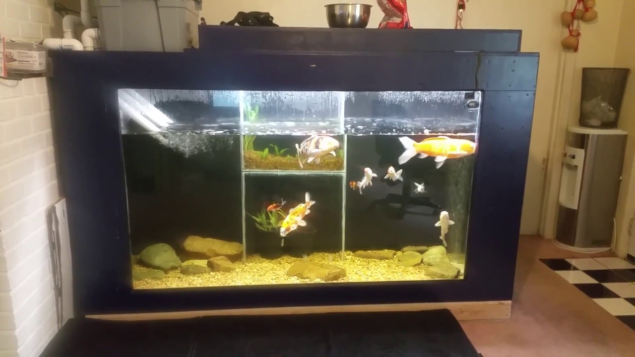 10 Gallon Pond Aquarium