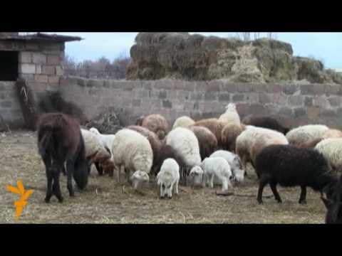 Meat Crisis In Armenia (Radio Free Europe / Radio Liberty)