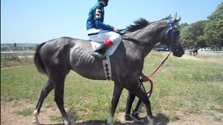 Скачки.  Большой спринтерский приз, на лошадях 3 х лет чистокровной верховой пор