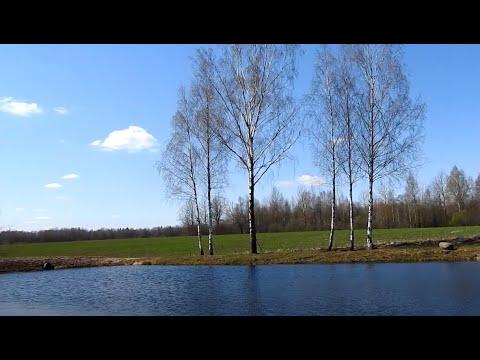 Участок на продаже со своей берёзовой рощей около пруда - Недвижимость Беларуси.