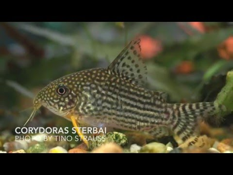 THE TOP 5 PEACEFUL FRESHWATER AQUARIUM COMMUNITY FISH (HD)