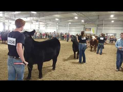 2019 Lancaster County Super Fair - 4-H/FFA Beef Show Showmanship and Breeding Classes