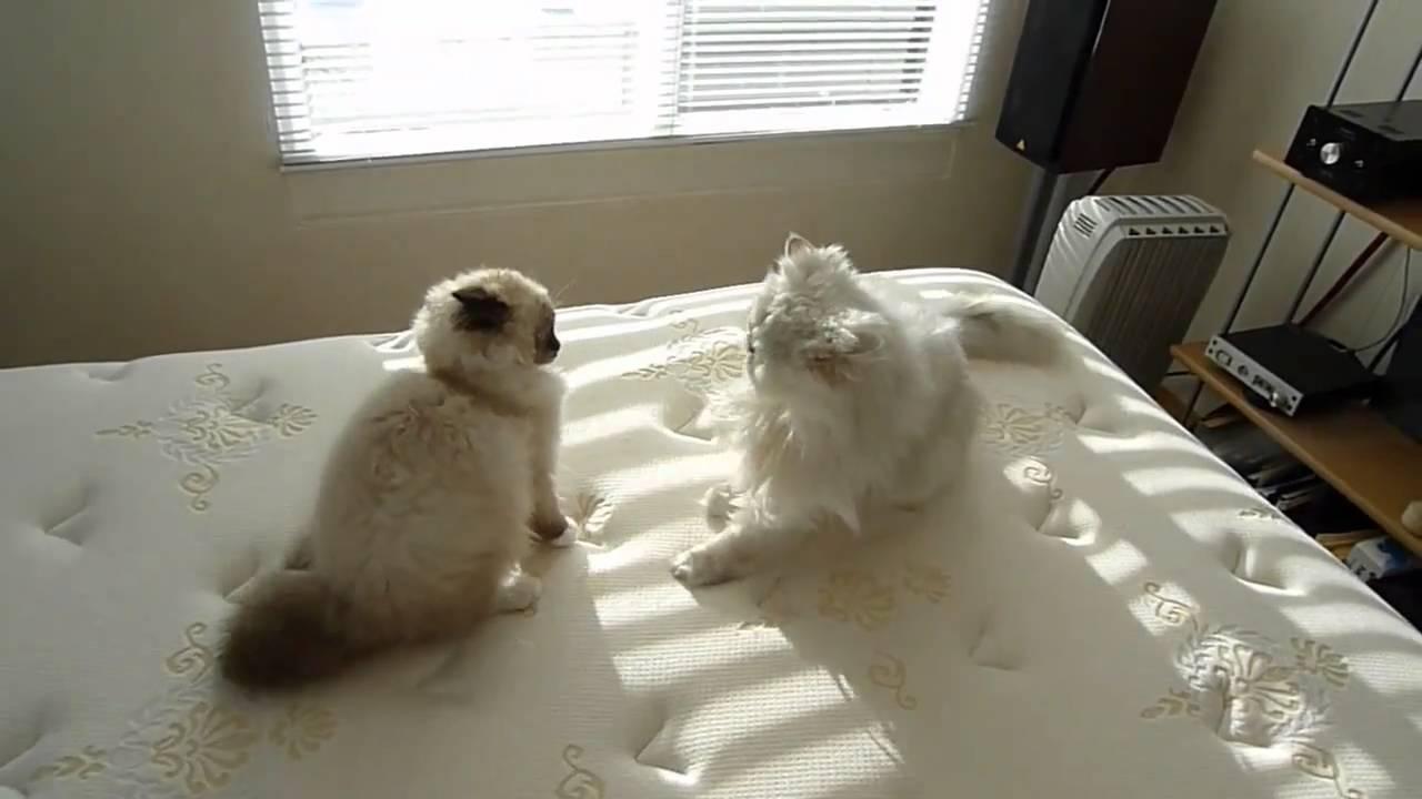 Chubby blonde in shower masturbating