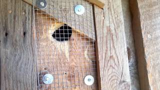 How to Prevent Woodpecker Damage