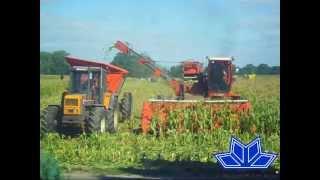 Zbiór słodkiej kukurydzy - RUN Chłodnia (Mała wtopa )