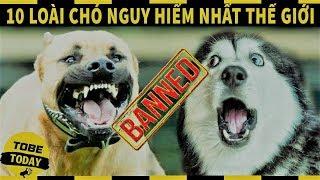 10 Loài Chó Đến Thánh Cũng Phải Sợ! Có Con Số 2 Trong Nhà Cho Tiền Trộm Cũng Không Dám Vào