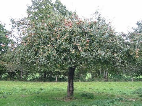 3 TRUE SCARY Haunted Apple Trees Ghost Stories