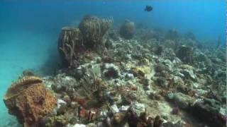 Scubaqua Sint Eustatius by Klaudie Bartelink & Ben Stiefelhagen