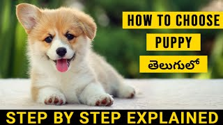 How To Choose Your Puppy in Telugu | Know Everything Before Buying | Pets TV Telugu