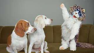 Zombie Cat Has 9 Lives: Funny Dogs Maymo & Potpie vs Zombie Cat Prank