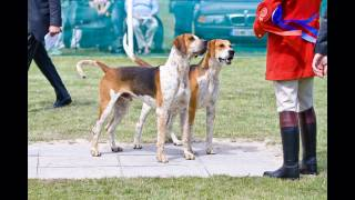 Irish Masters of Foxhounds Association, Hound Show, Stradbally, Co....