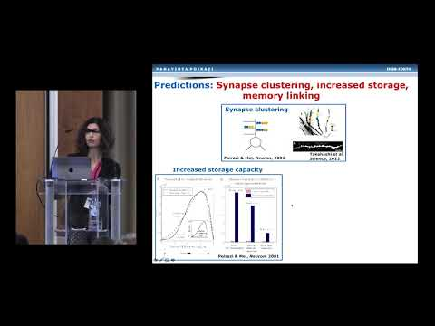 Yiota Poirazi - Active Dendrites And Their Role In Neuronal And Circuit Computations (Cosyne 2019)