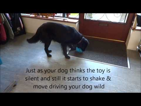 bonnie-dogs---jumping-ball-dog-toy